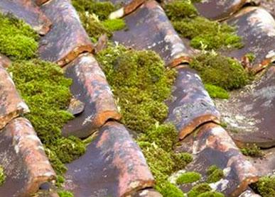 Démoussage de toiture et façade à Valence